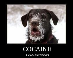 fucking woof: Funny Animals, Picture, Face, Funny Dogs, Pet, Funny Stuff, Humor, Funnies