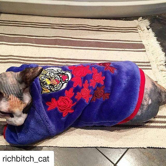 Фотоотчёт покупателей одежды для кошек Сфинкс @clothes_for_cats Толстовка для кошек Сфинкс. Выполнена из тёплого, мягкого и нежного материала велсофт.