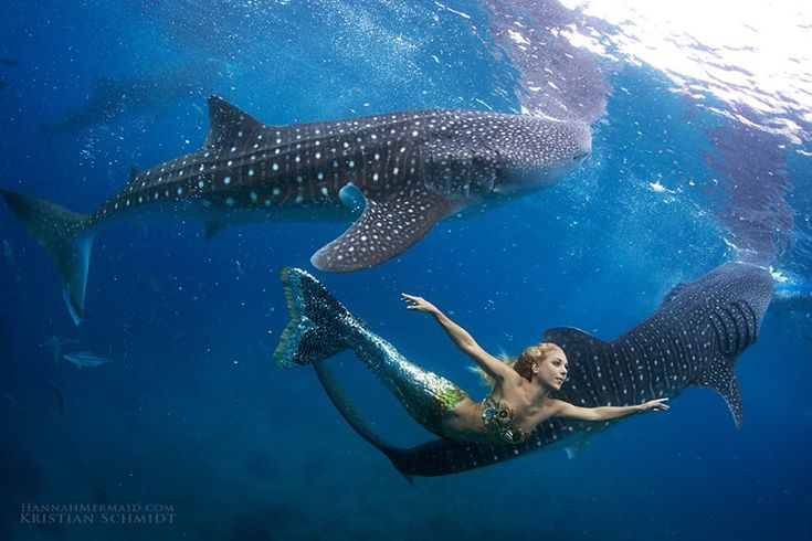 Hannah Fraser, real life mermaid, goes for a swim with Whale sharks  8 Times Humans Interacted With Sharks and Something Beautiful Happened