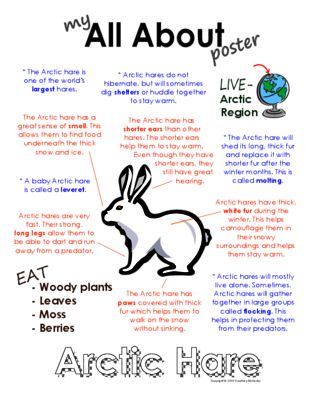 My All About Arctic Hare Book - (Arctic / Polar Animals) from CourtneyMcKerley from CourtneyMcKerley on TeachersNotebook.com (9 pages) - This book will be fun to add to your lesson on Arctic hares. Other Polar animal books available: Arctic fox, snowy owl, Beluga whale, puffin, Emperor penguin, Arctic wolf, walrus, polar bear & caribou
