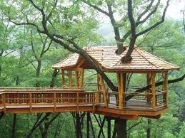 Deck or tree house?