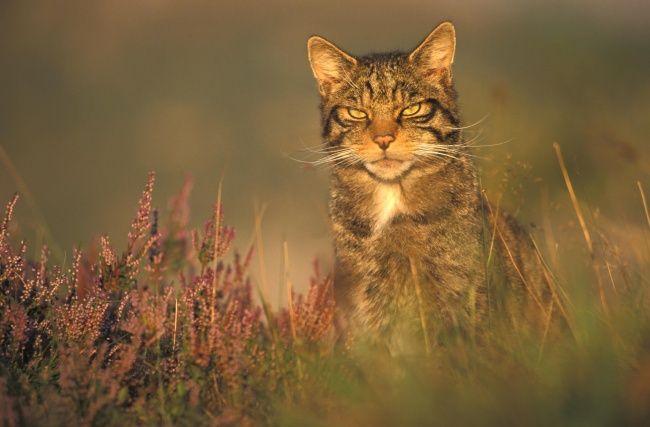 Фотографии уличных и дворовых котов, они как в жизни — бесстрашные и дерзкие! | Дни.Жизнь.Суть