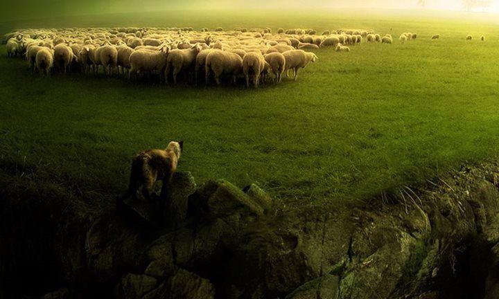 Овца и волк по-разному понимают слово «свобода», в этом сущность разногласий, господствующих в человеческом обществе.  © Авраам Линкольн