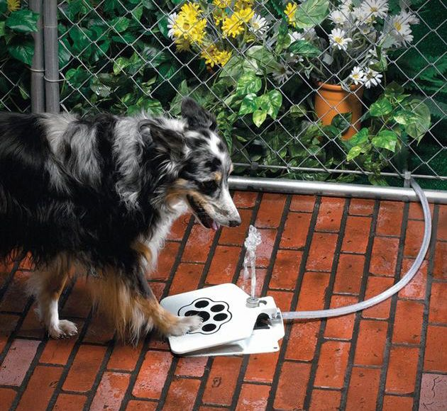 Paw Activated Doggie Fountain