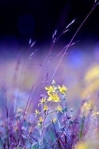 The Meadow ~ wildflowers....