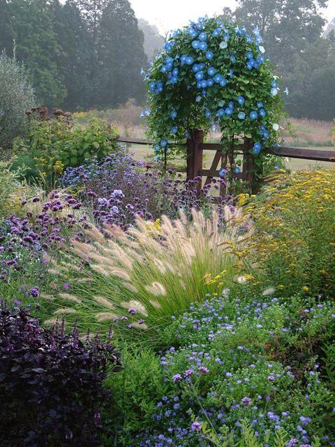 Prachtige Tuin: blauwe en paarse kleuren in combinatie met verschillende soorten gras. #mooituintje