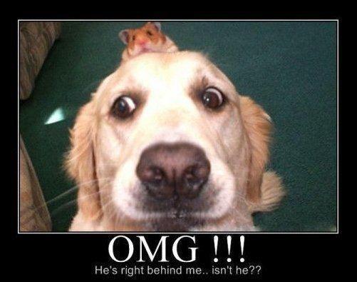 neurotic dog.