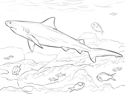 Realistic Bull Shark Coloring page
