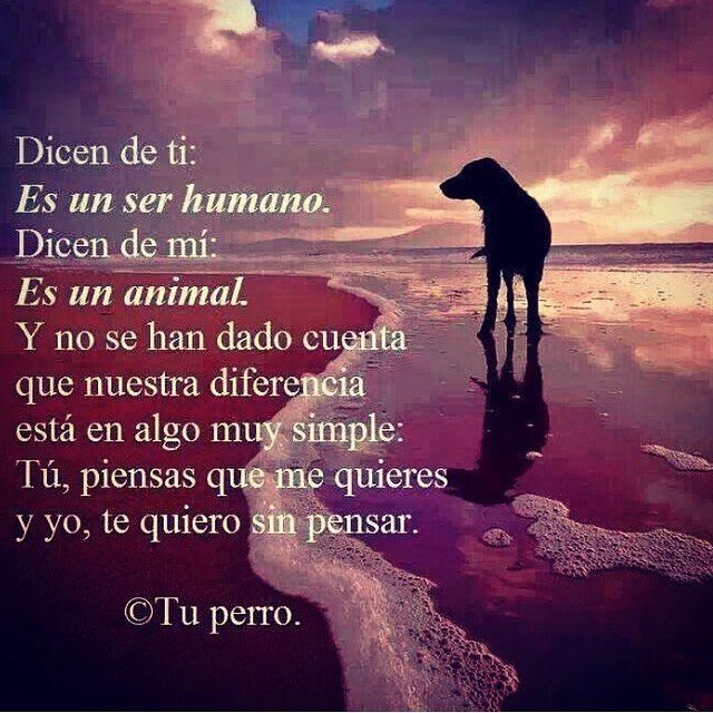 Que bello... #mascotas #animales #perritos #amor #amigofiel #bondad #ternura #familia #incondicional #pets #dogs #love #family #animals #cutedogs