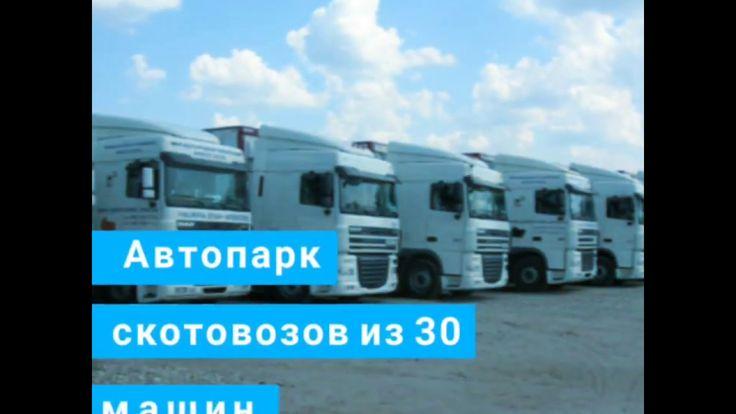 Скотовозы,перевозка скота, услуги скотовоза, крупно рогатый скот  +79656176005 WhatsApp