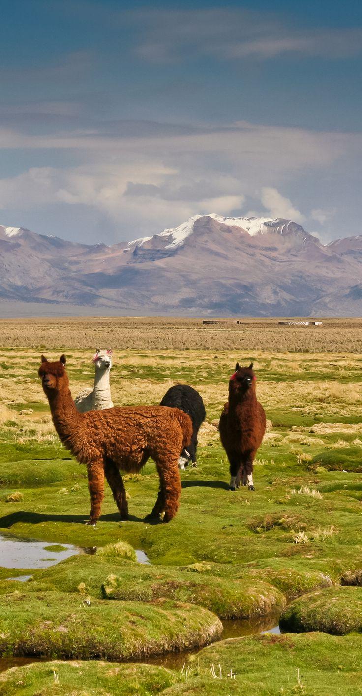 De hooglanden van Bolivia. www.betterplaces.nl/bolivia-reizen