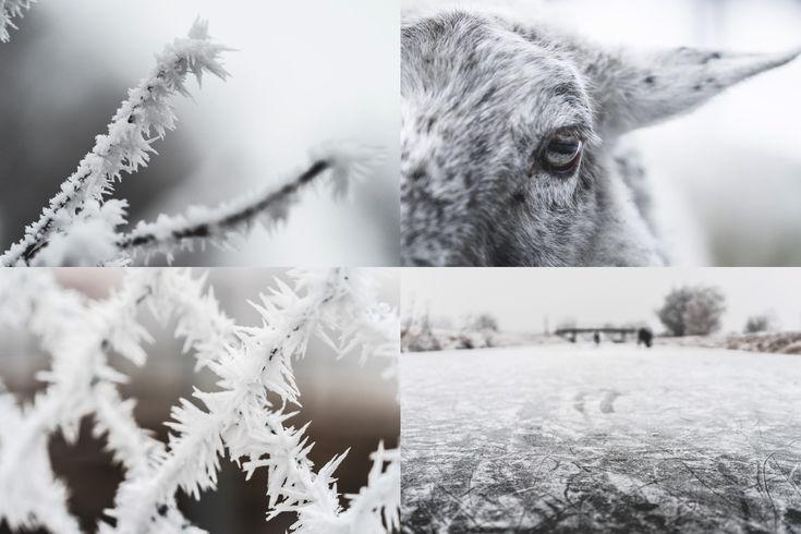 frozen-wonderland-preview-2