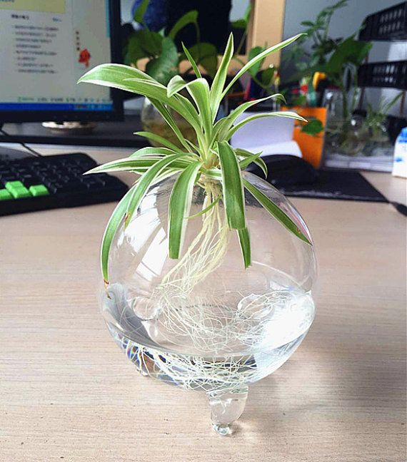 This footed orb terrarium is handmade with high boron silicon glass,clear and light.has three little legs to support its body.Also since the vase is round,It can be tabletop vase with marimo moss ball/sands/sea fan and accessories fit home decoration/office decor.  *You only received 1 empty footed glass orb.green plants and flower are not include*  Orb Dimensions: Small: 3.5 Diam., 4 Height; The top opening is about 0.65 inches in diameter Medium:4 Diam., 4.3 Height; The top opening is…