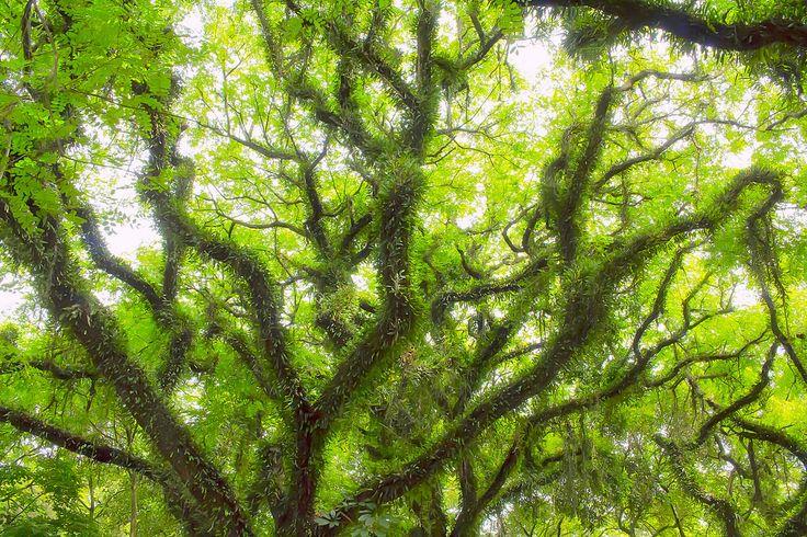 Mágical tree