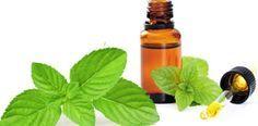 la menthe poivrée contre le rhume et le mal de gorge