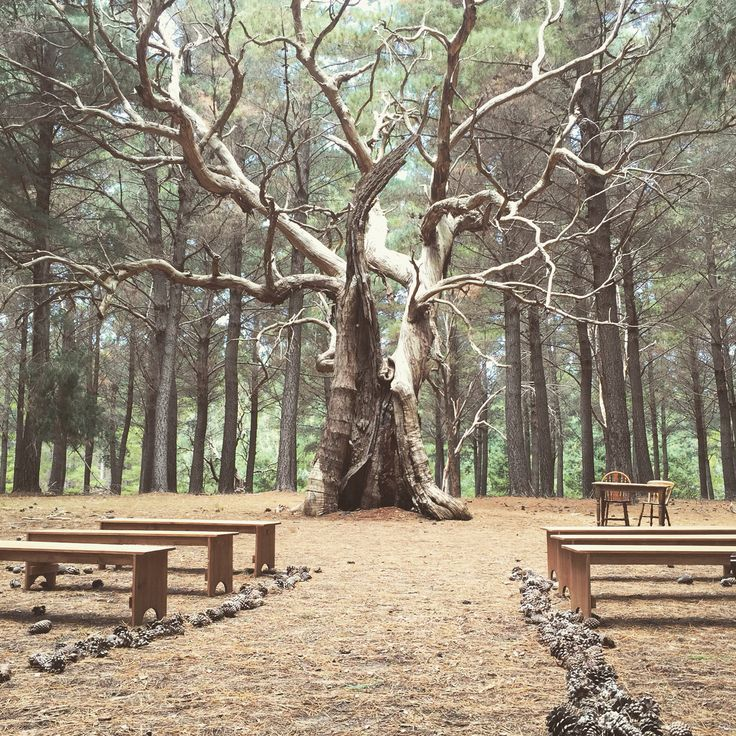 Magical wedding ceremony setup we did at Kuitpo forest, South Australia. The giant old tree made for a stunning backdrop! Our benches blended in nicely with the forest.