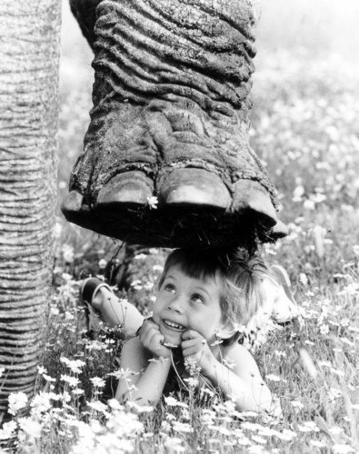 Elephant stepping on little boy  by John Drysdale: