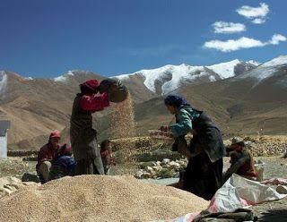 Sanatate cu pofta de viata: Cum au reusit tibetanii sa isi adapteze viata la m...
