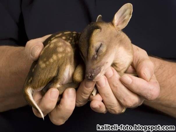 Sevimli Hayvan Yavruları