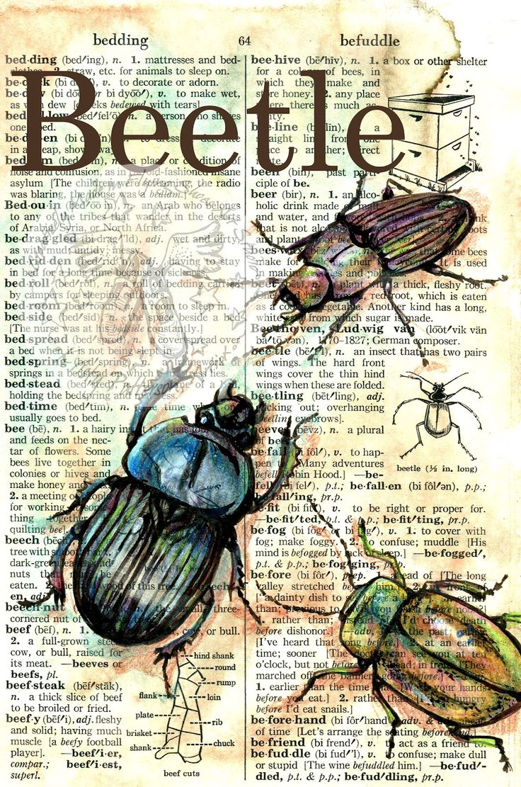 Beetle Mixed Media Drawing on Distressed, Dictionary Page - flying shoes art studio