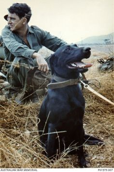 Vietnam. c.1968. Private `Stoney' Burke, a member of Assault Pioneer Platoon, Support Company, 7th Battalion, The Royal Australian Regiment (7RAR), ...