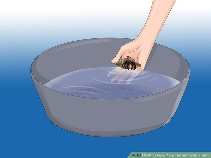 Image titled Give Your Hermit Crab a Bath Step 2