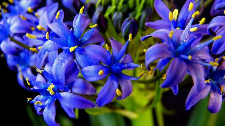 faire livrer un bouquet de fleurs à domicile 105 #fleurs #bouquet