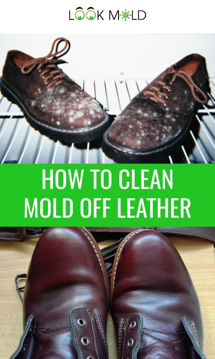 How To Clean Mold Off Leather In Four Easy Steps in 2020