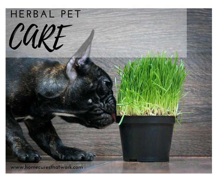 Natural Cures For Diarrhea In Puppies