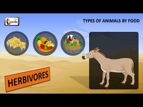 Types of animals - food   Herbivores carnivores omnivores   Kindergarten learning videos playlist