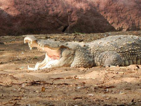 Crocodile Photo by Manoj Kumar V. � National Geographic Your Shot