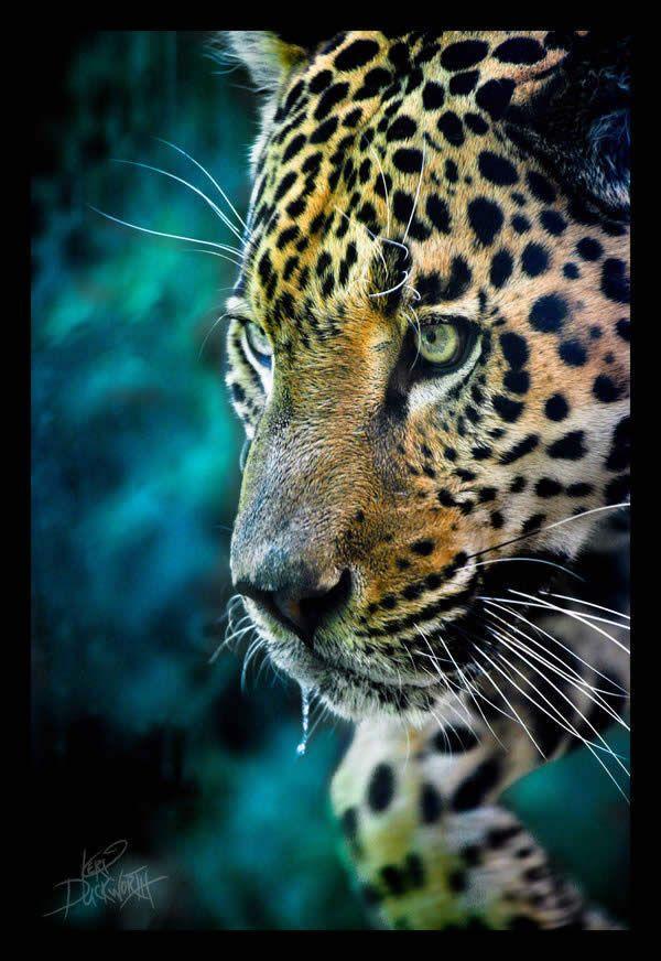 Beautiful Photography of Amazon Rainforest
