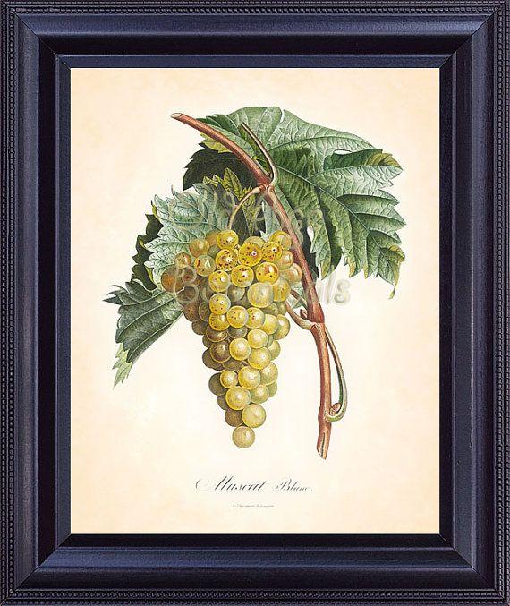 Poiteau 8x10 botanical print fruit art print white wine grape muscat vintage art plate chart home decor kitchen illustration to frame fv1402