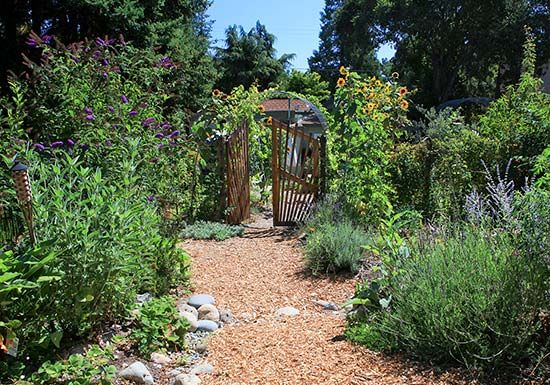 best 25 permaculture garden ideas on pinterest. Black Bedroom Furniture Sets. Home Design Ideas