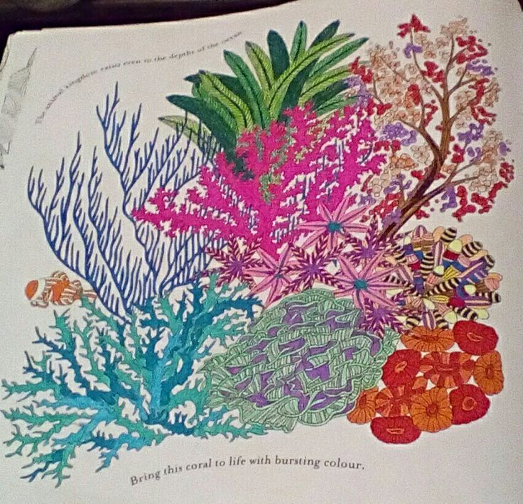 Animal Kingdom Colouring Book Coral Coloring Adult