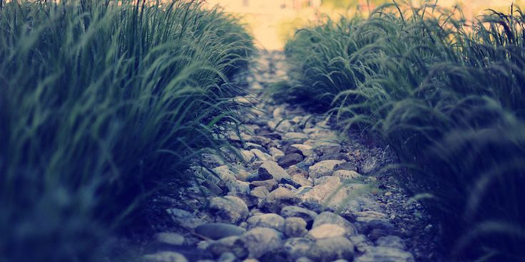 Grass Nature Paths Twitter Cover & Twitter Background | TwitrCovers