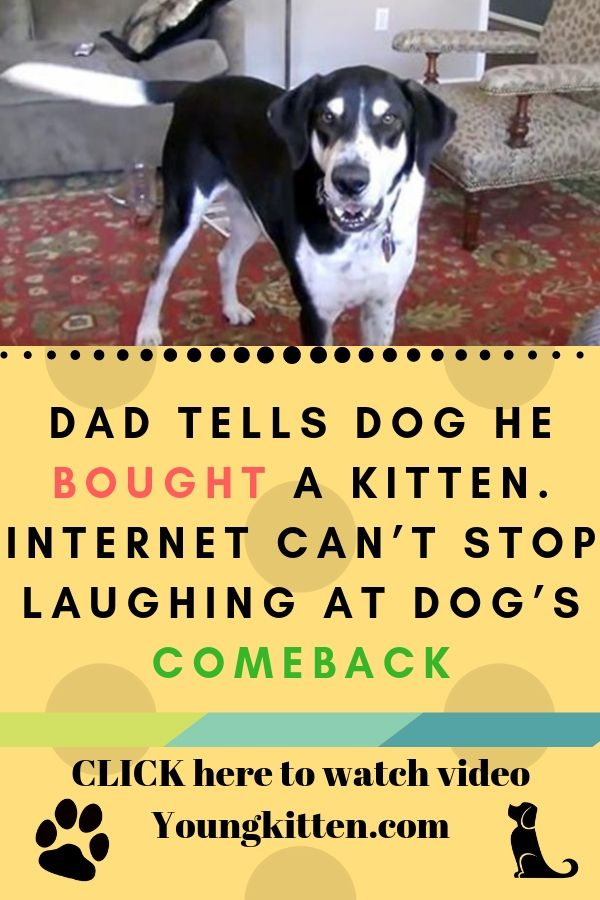 Dad Tells Dog He Bought A Kitten Internet Can T Stop Laughing At