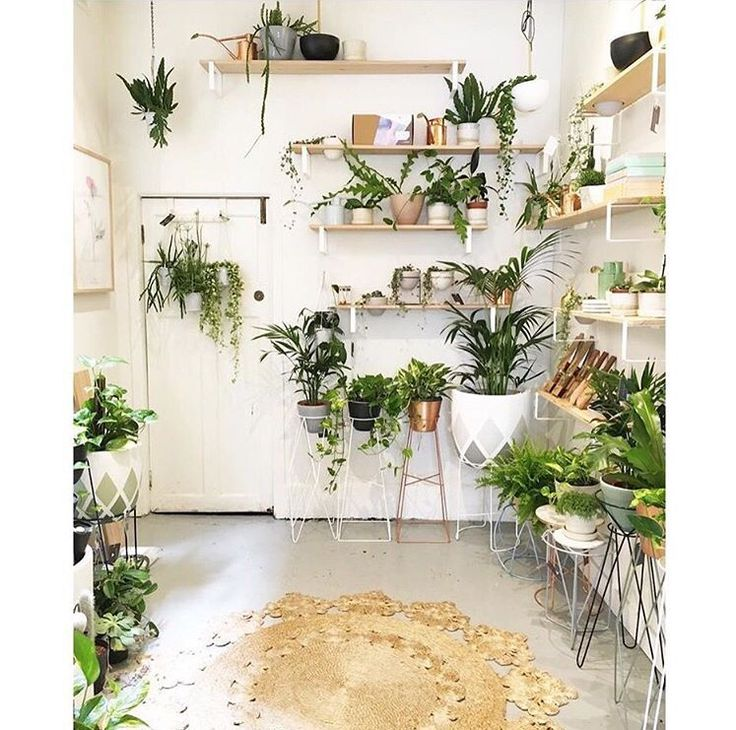 Our Marigold rug captured in-store with the beautiful plants from @ivymuse_melb. Pic by @knotted_ | armadillo-co.com
