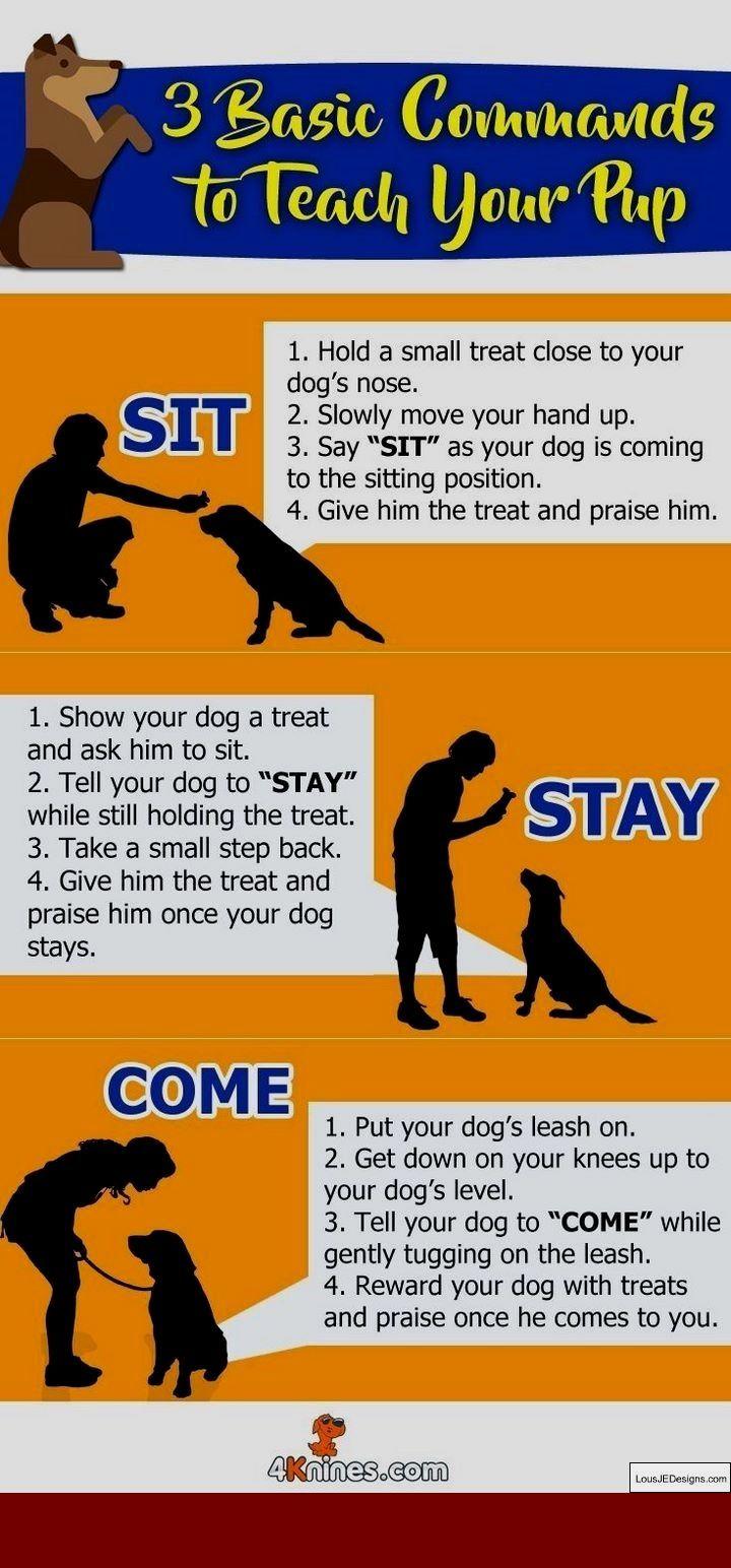 How To Train A Dog To Walk On A Leash Dog Training Training