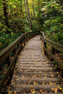 Forest Stairway  Near Mingo Falls in the Smoky Mountains (North Carolina).    For #forestfriday by +Rudolf Vlček
