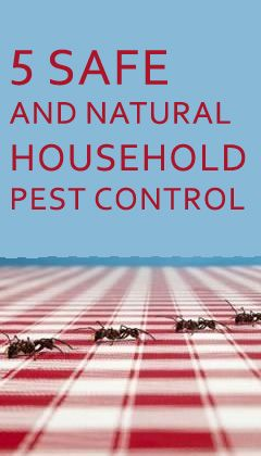 5 Safe and natural household pest control