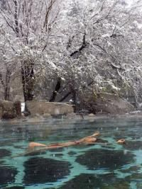 I have not yet been to Cottonwood Hot Springs, near Buena Vista, Colorado, but I'd love to go!