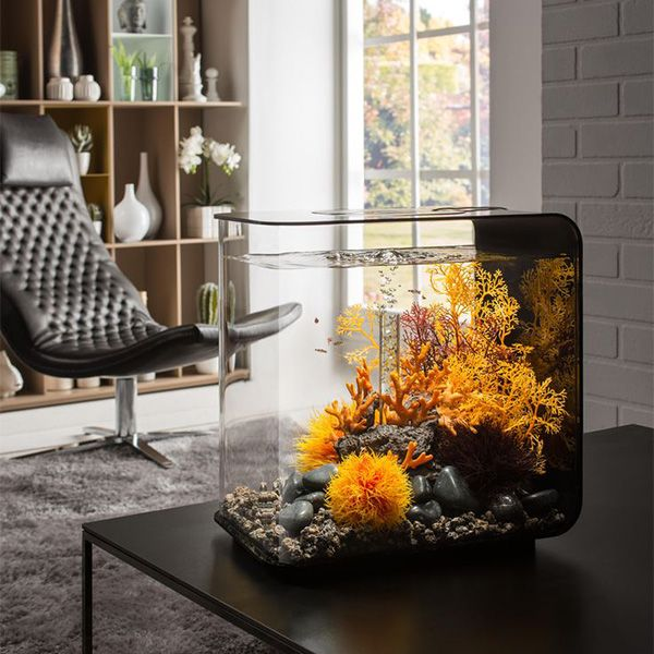 how to set up biorb fish tank