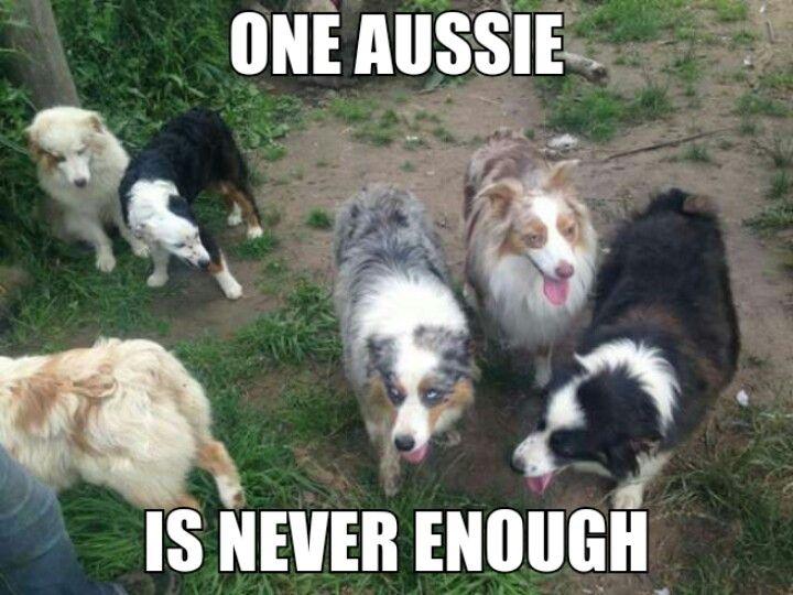 Yup! About to get Aussie # 2 :)
