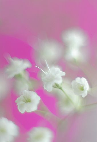 Flower by Bahman Farzad, via Flickr