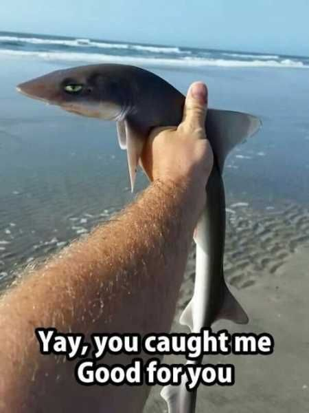 36 very funny pictures you will enjoy funny pictures for Baby shark fish