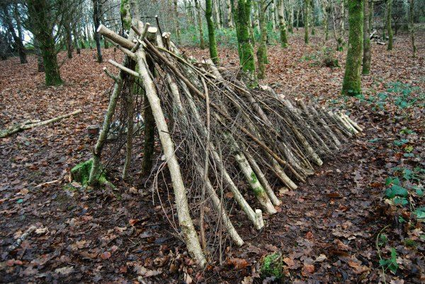 shelter building in the woods of wales