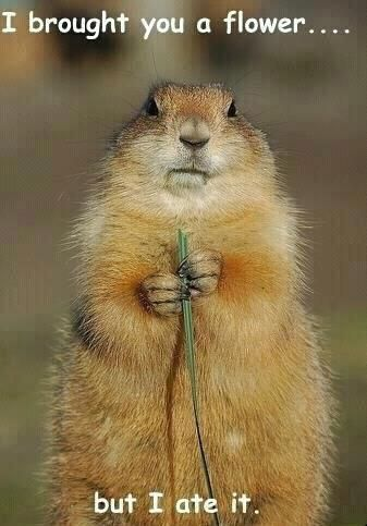 I bought you a flower but I ate it: Animals, Funny Stuff, Humor, Funnies, Funny Animal, Things, Smile, Flower