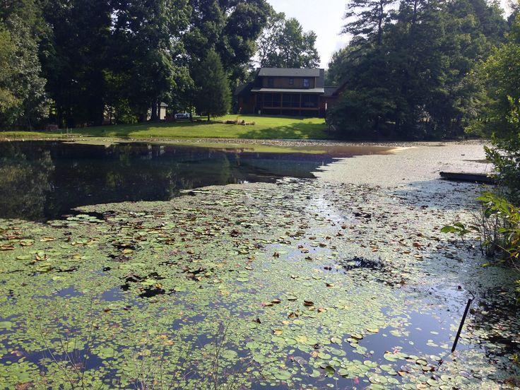 Farm Pond Weed Control