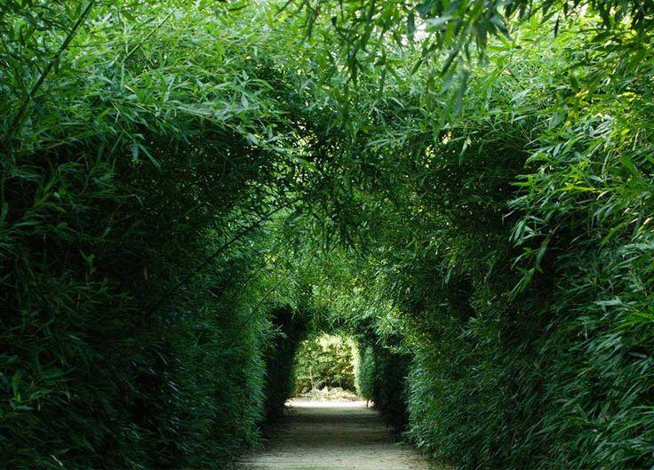 È il più grande labirinto esistente, composto da piante di bambù, e la sede della collezione d'arte di Franco Maria Ricci, editore d'arte italiano.